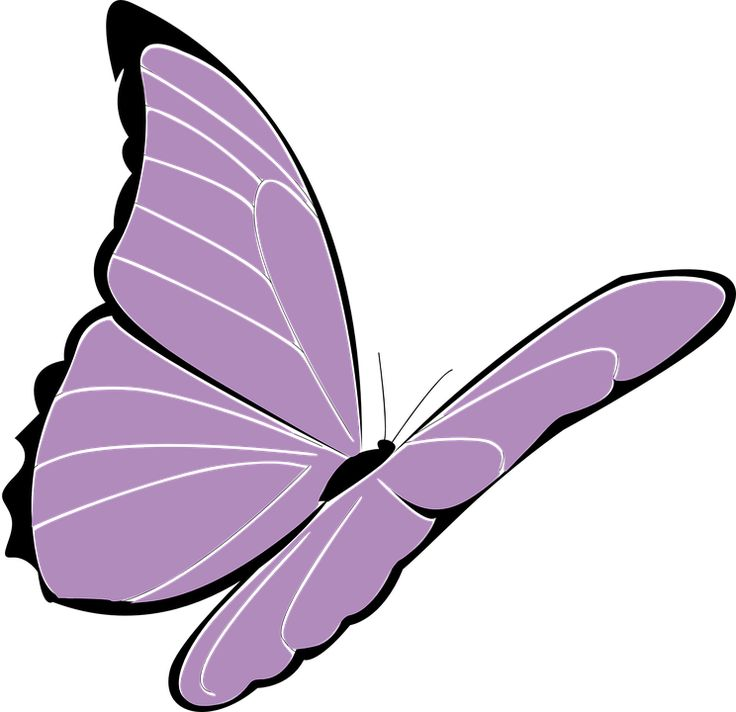 Image result for butterfly drawing