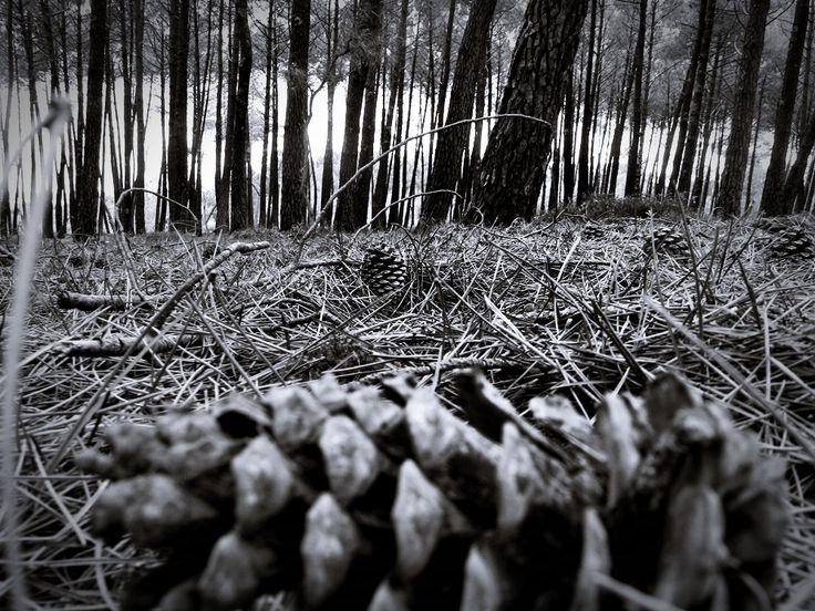 """sous bois, forêt des Landes de Gascogne, Photo """" Les chiffons de la sardine"""""""