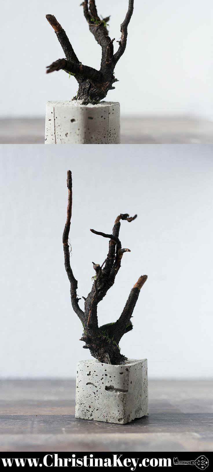 Kreatives Beton Projekt - Baum in Beton Quadrat - Die schönste DIY Idee der Saison! Jetzt Video Anleitung und noch mehr Fotos finden auf CHRISTINA KEY - dem Fotografie, Blogger Tipps, Fashion, Food und Lifestyle Blog aus Berlin