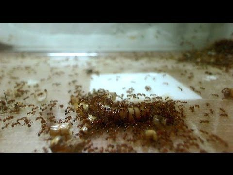 how to find ant colony in house