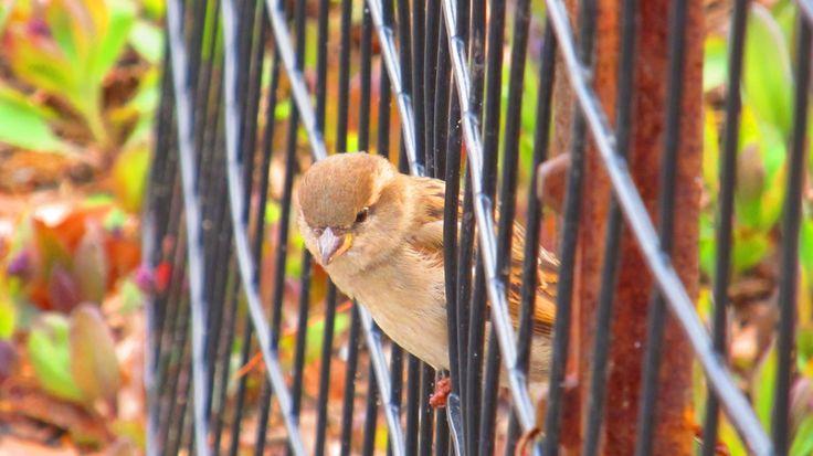 Cute little sparrow in Central Park