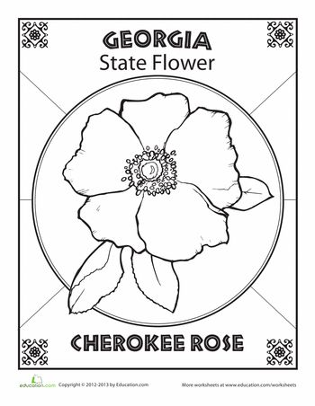 Georgia State Flower Worksheets And Georgia