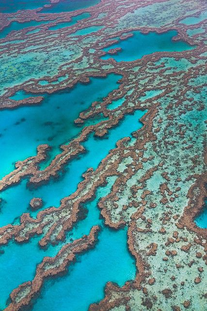 Great Barrier Reef - Australia. Greatest places to dive