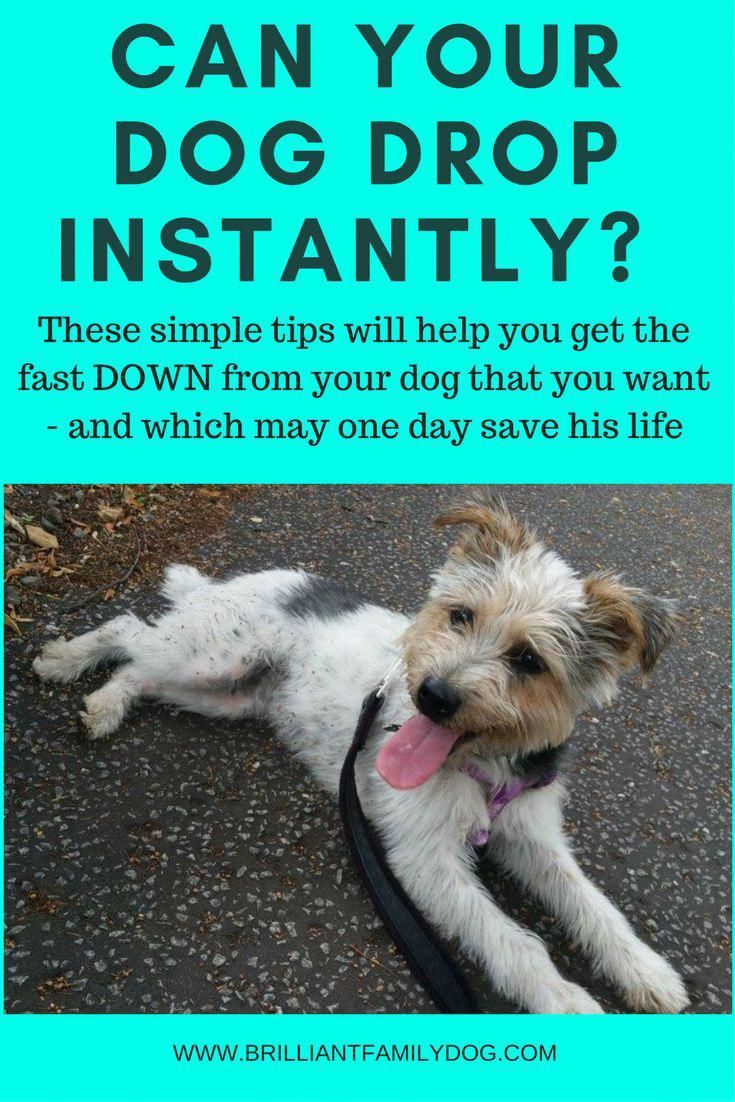 Free Hacks For Best Dog Training Tricks If You Are Going To