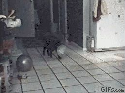 This one.. The more you watch, the better it gets! 27 Cats That Just Can't Handle It
