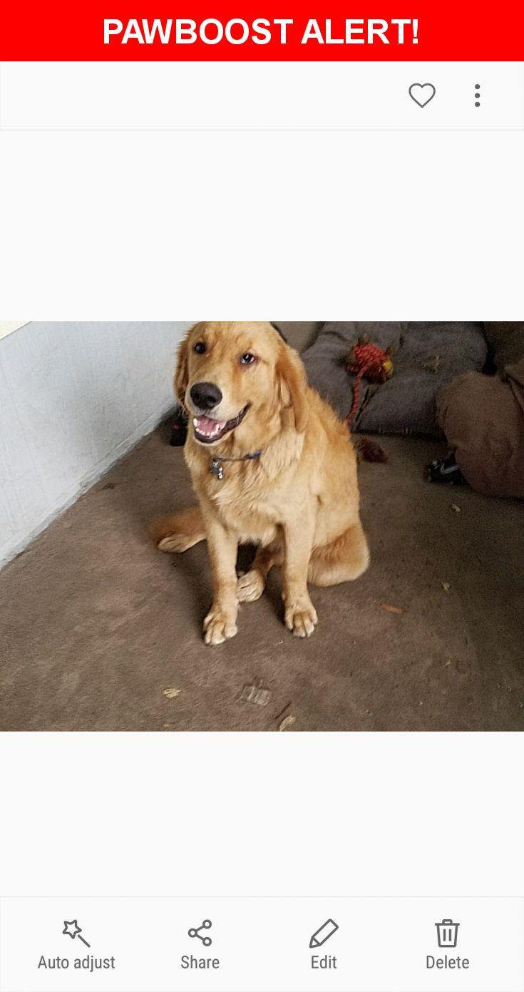 Please spread the word! Leo was last seen in Jacksonville, FL 32244.    Nearest Address: Near Ortega Bluff Pkwy & Bristol Bay Ln S