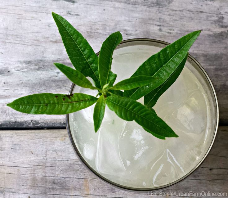5 Herbs to Grow for Summer Cocktails - Photo by Lisa Steele (UrbanFarmOnline.com)