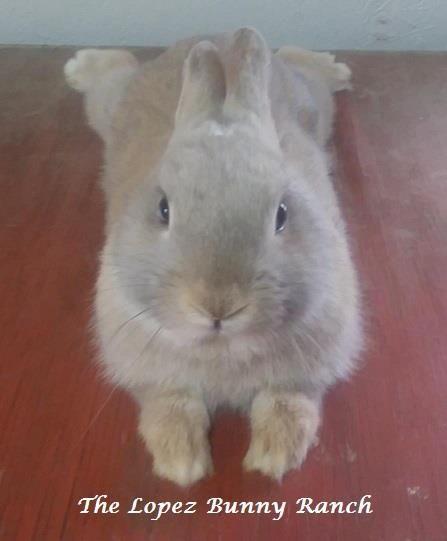 A sweet relaxed little bun.