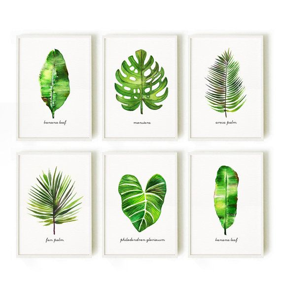 Leaf art, Large art Watercolor palm leaf, Botanical print set, Nature print, Monstera illustration, Banana leaf, Fan palm  This set of 6 leave art prints will make a tropical rainforest atmosphere for your room. They were painted by me, Tinarosa Tam. I like minimal style painting, clean, simple and graceful.  This listing includes: 1. Areca palm 2. Banana leaf #1 3. Banana leaf #2 4. Fan palm 5. Monstera 6. Philodendron gloriosum  SMALL & MEDIUM SIZE PRINT • 4x6 / 5x7 / 8x10 / 11x14 / 12x18…