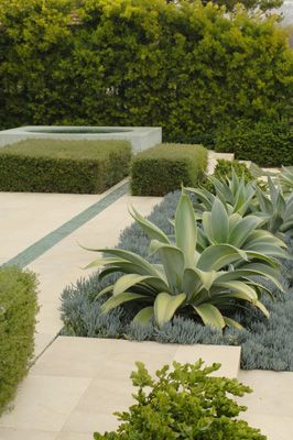 The structure of these plants formalizes spaces in this garden, and the complementary choices of plants combined with planning make this space work, where often this combo of plants without planning can see these gorgeous plants looking like they're in a desert because it is too sparse.    Architecture and Landscape Architecture, agave plants