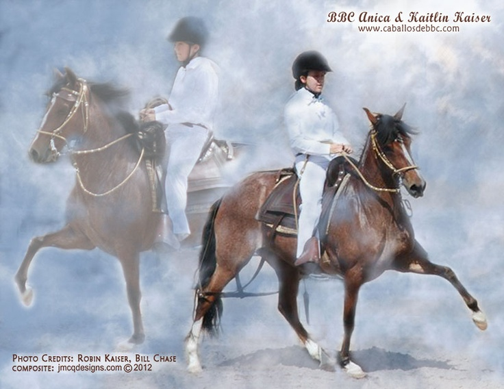 BBC Anica & Kaitlin Kaiser. Peruvian Paso mare owned by Bill and Becky Chase of Caballos de BBC. Image created by www.jmcqdesigns.com: Peruvian Paso, Multi Bre Hors, Paso Mare, De Bbc, Peruvian Hors, Caballos De, Movie Hors, Kaitlin Kaiser, Bbc Anica