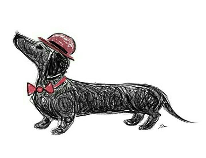 Dachshund Dachshunds Dachshund Drawing Dachshund Dog
