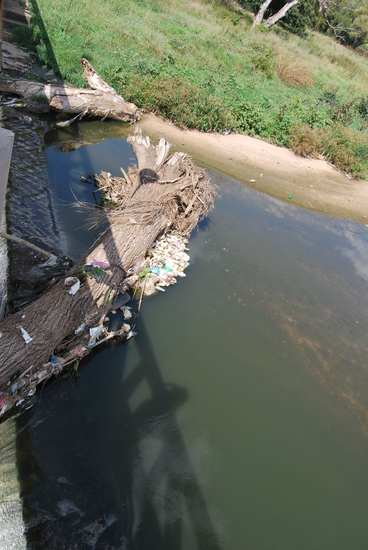 Pollution found in the river.