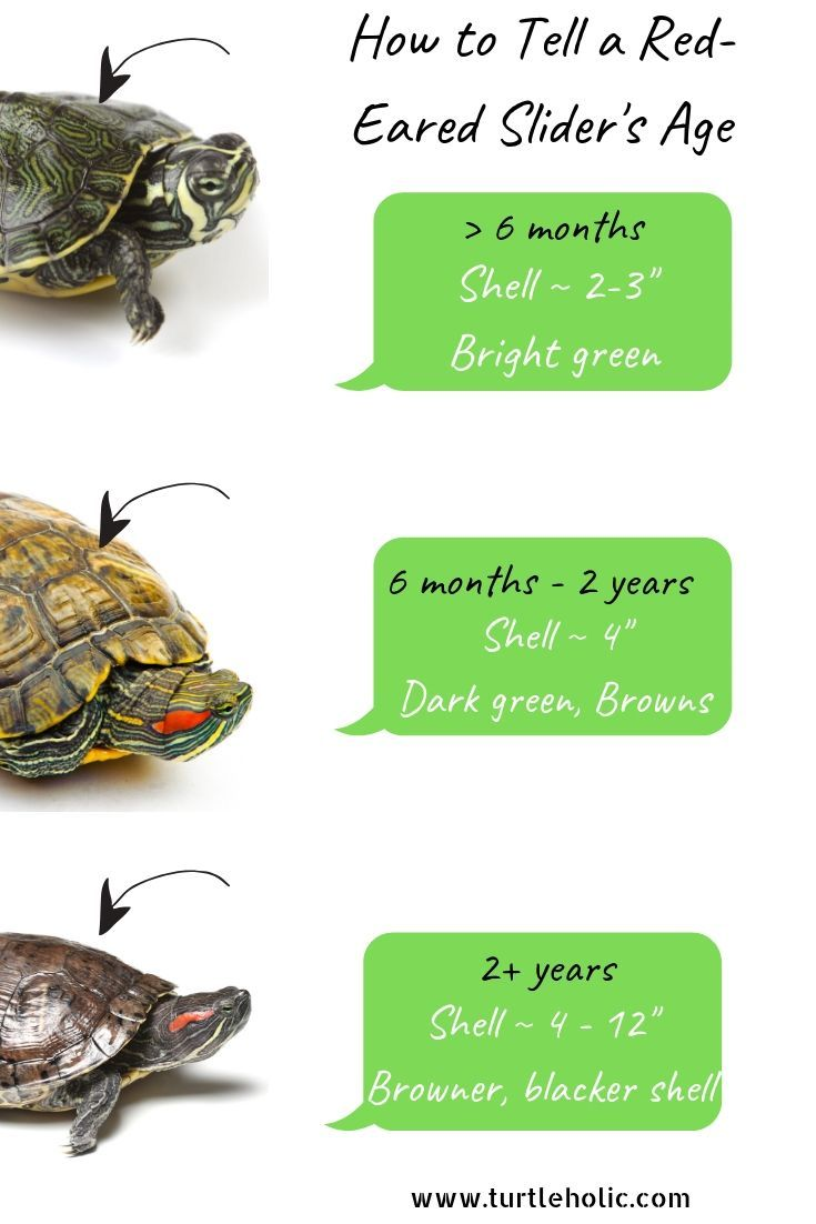 Clear Simplified How To Guides For Pet Turtle Owners In 2020