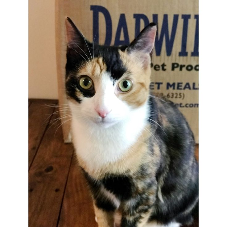 Darwin S Natural Raw Catfood Reviews