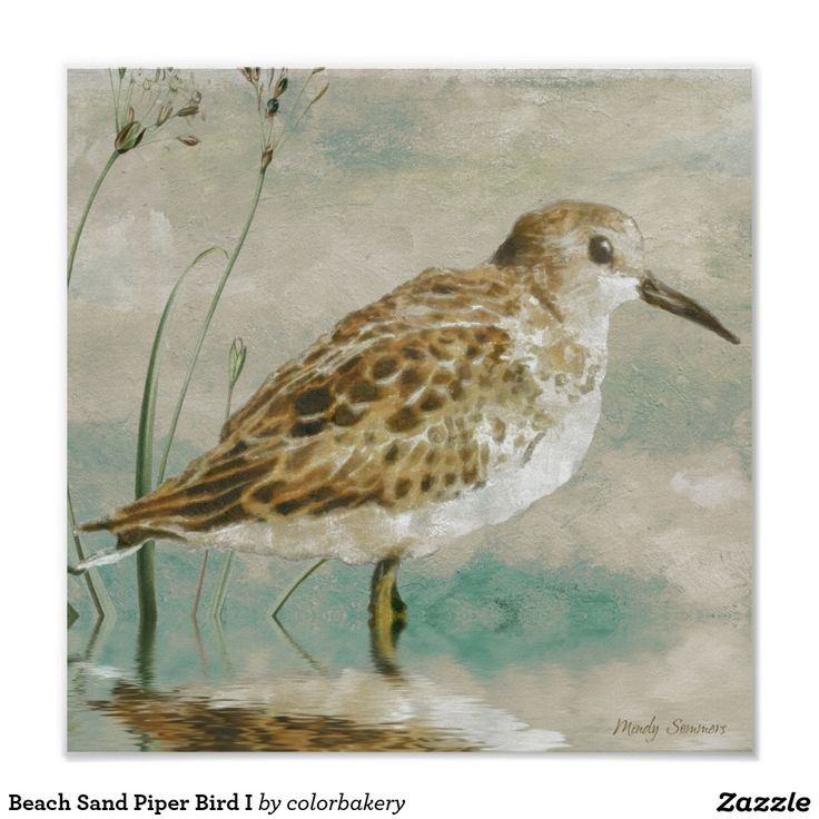 Beach Sand Piper Bird I Poster