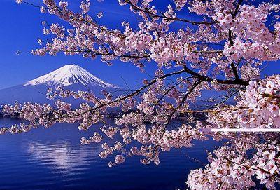 Mt. Fuji and Sakura