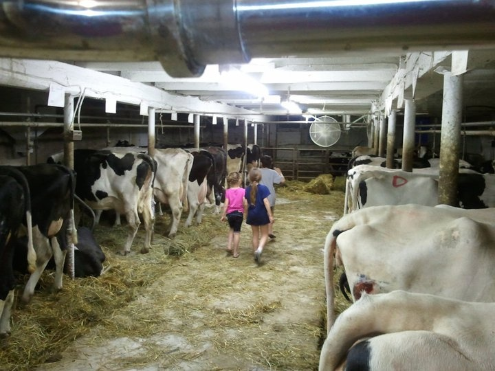 in our barn when we still were milking cows