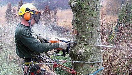Tree removal service is usually able to handle tree pruning, tree trimming, partial tree cutting, removal of parts cut off tree as well as tree felling. The significant advantages to hiring a tree removal service include: Time Savings,Saves money,Helps Prevent Injuries,Makes Things Safer,Keeps Things Cleaner.