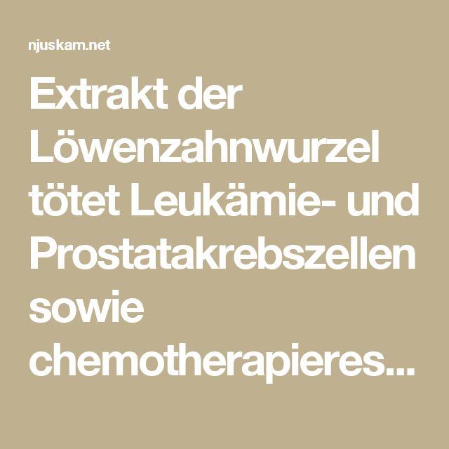 Extrakt der Löwenzahnwurzel tötet Leukämie- und Prostatakrebszellen sowie chemotherapieresistente Melanome | njuskam!