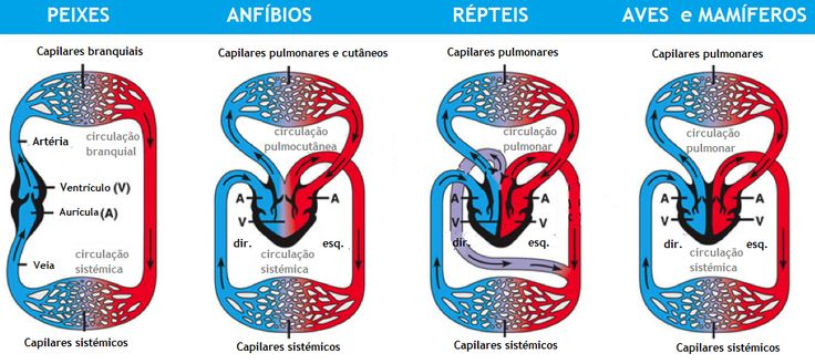 Respiração de répteis e anfíbios