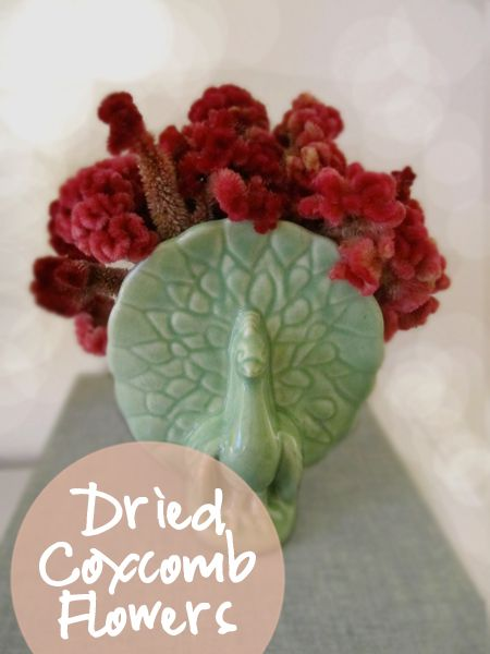 Very Fond Of: Dried Coxcomb Flowers