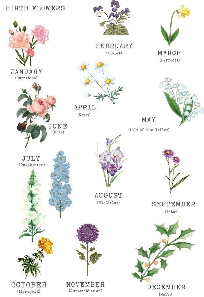 Juli Geburtsblume Google Suche Birth Month Flowers Blume Ideen
