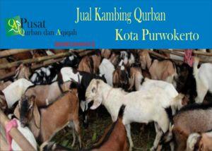 Kambing Qurban Purwokerto