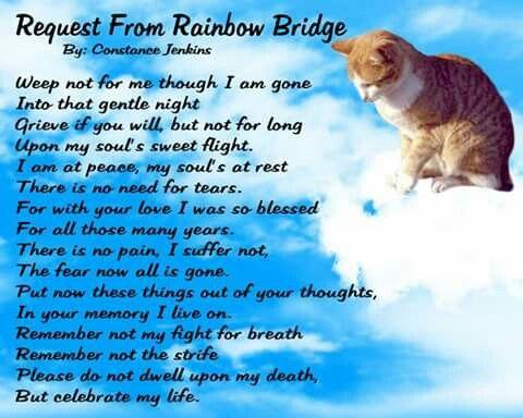 Message from the Rainbow Bridge. <3 <3 <3 <3 <3 <3 <3 <3 <3