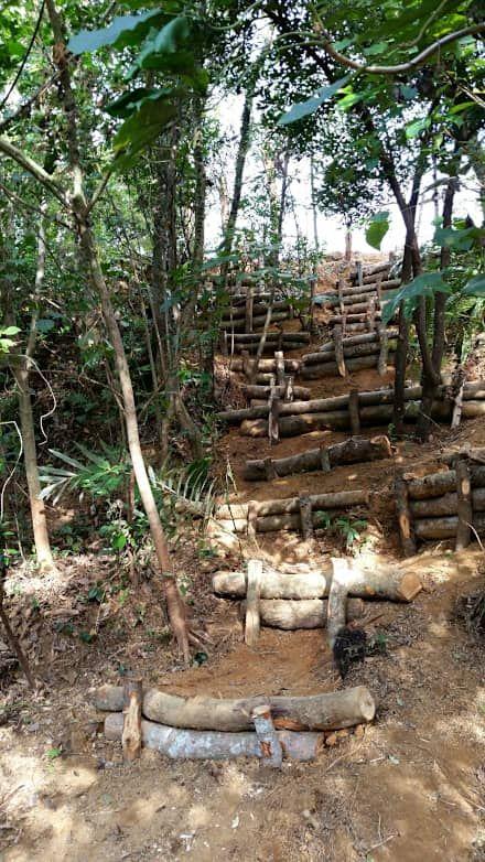 木乃香の森スタジオ造園工事&森林保全工事: 艸木/SOUMOKUが手掛けた庭です。