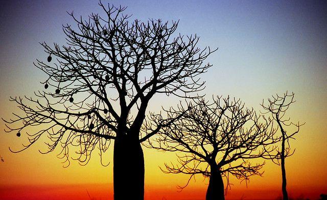 Boab Trees - Western Australia..beautiful silhouettes and colours. Sigh!