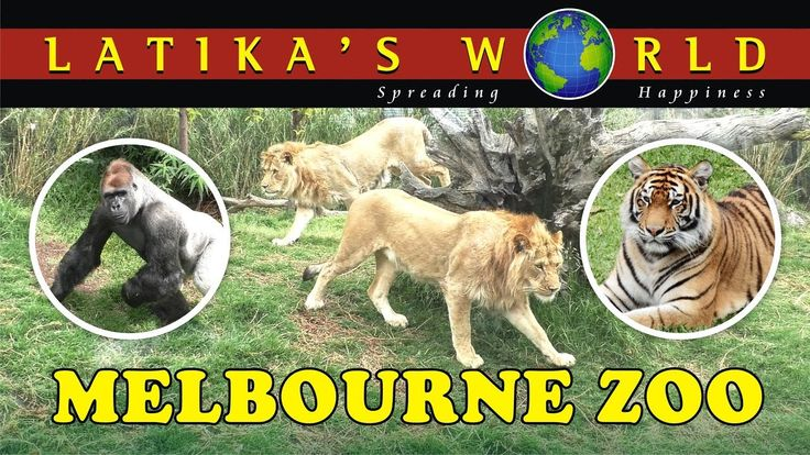MELBOURNE ZOO, AUSTRALIA, LATIKAS WORLD