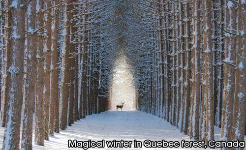 Magical winter in Quebec