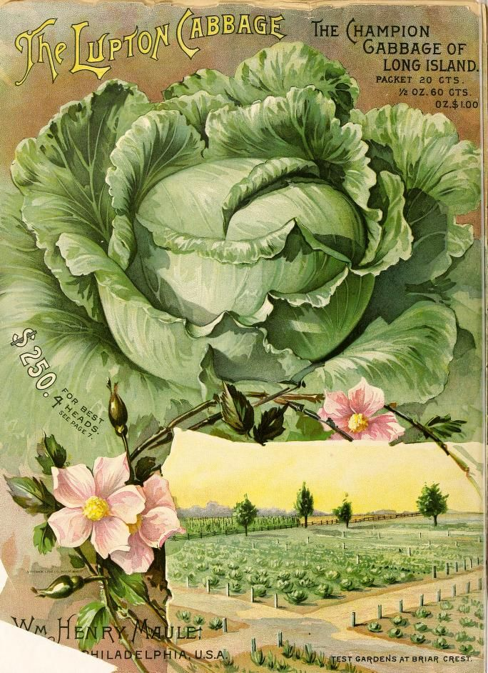 Maule's seed catalogue : 1894 Featuring the Lupton Cabbage, the Champion cabbage of Long Island!