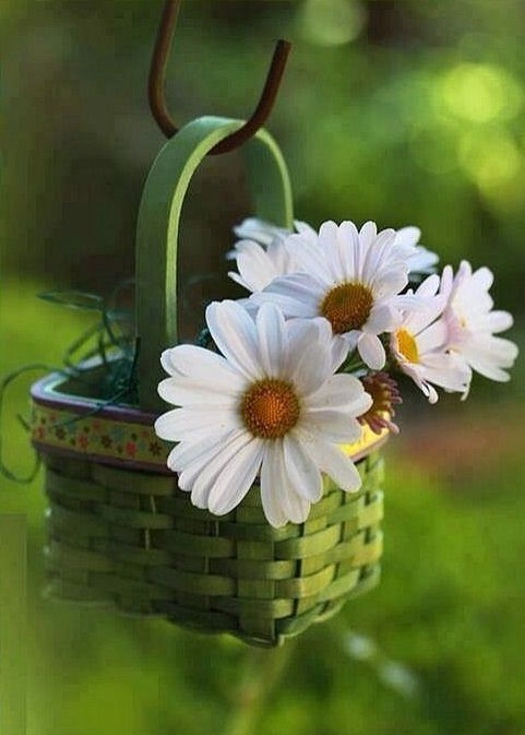 Daisies (1) From: As Cosy As Can Be, please visit
