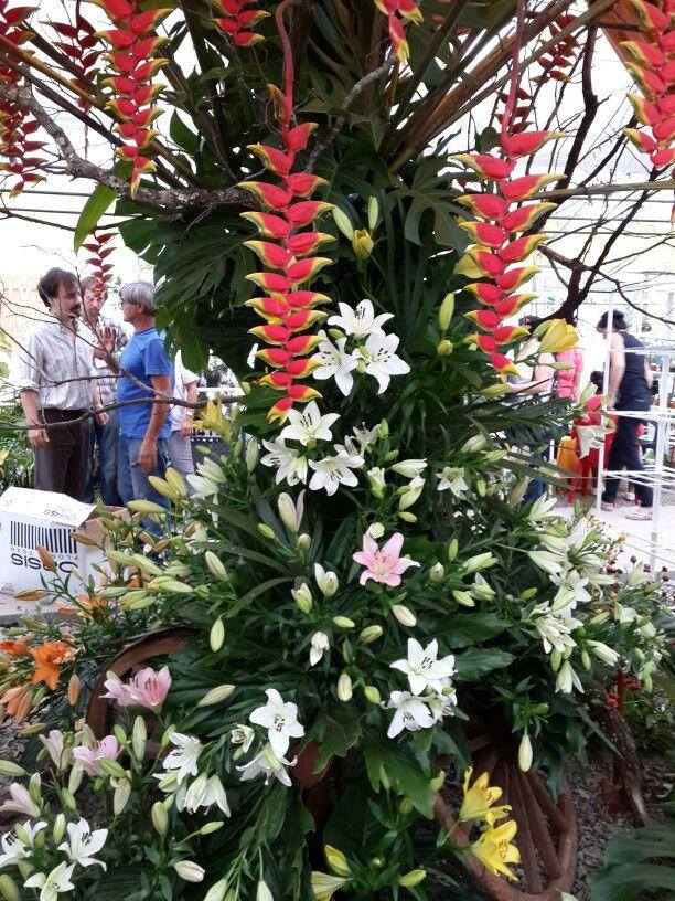 Expo Misiones en Flor 2014