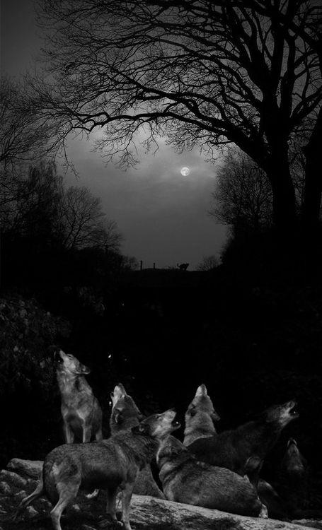 Bajo la luz de la luna llena en la oscuridad unos aullidos se escuchan,  recorriendo cada zona que rodea, aquellas misteriosas criaturas le hablan a su luna.  En cada bosque, En cada pueblo, En cada casa esa música suena dando la llamada,  Las bestias duermen y los seres misterios despiertan hacia una nueva aventura.