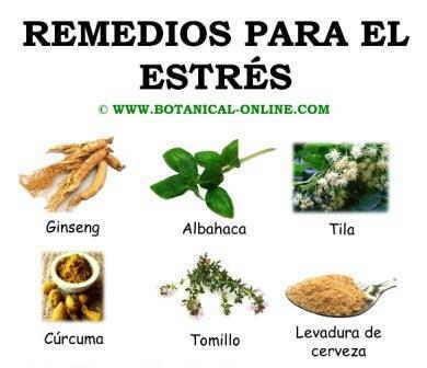 1000+ images about Remedios Naturales on Pinterest | Tes