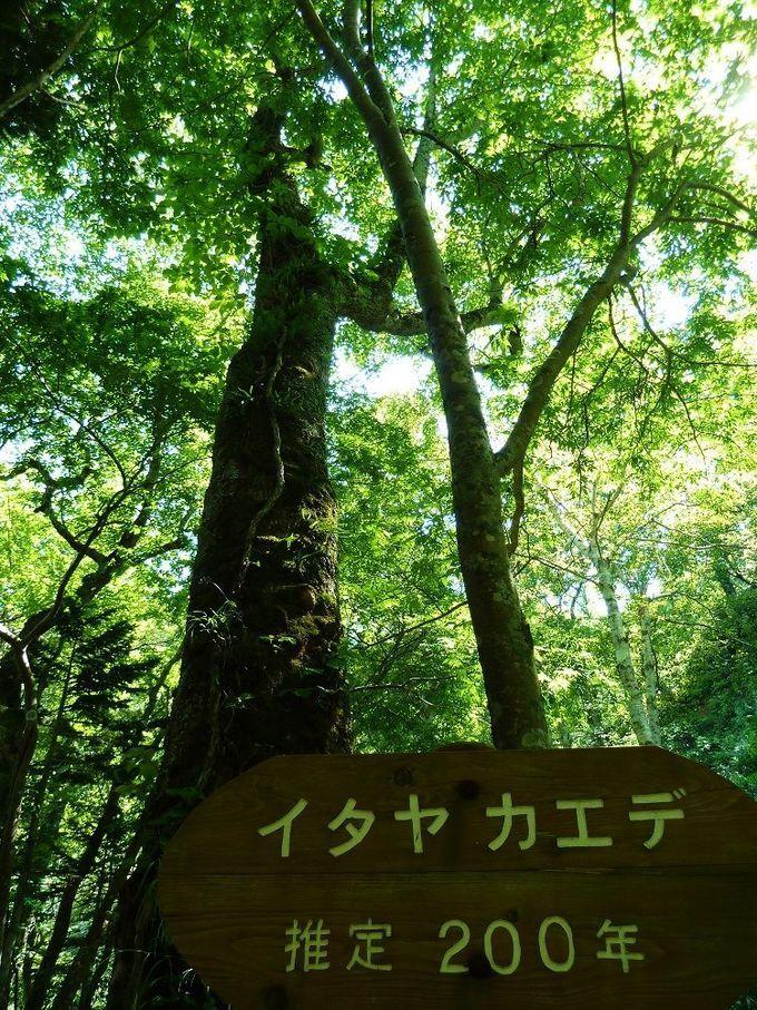 美しい自然がいっぱいの知床。知床の見所!