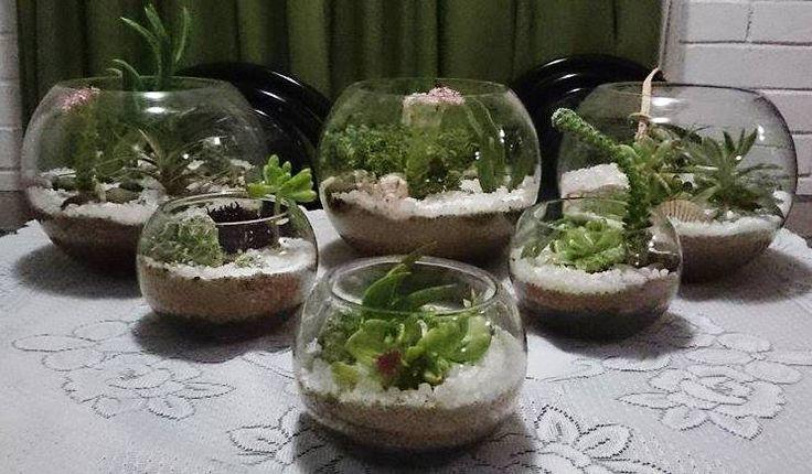 Diferentes terrarios con cactus y suculentas