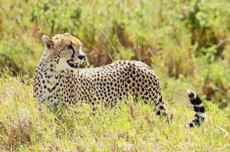 On Safari in Tanzania - My Photo Tips