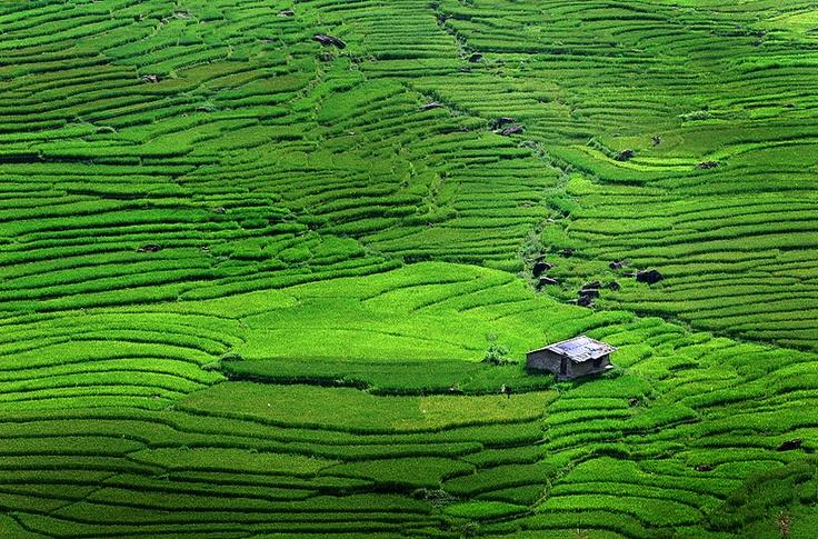rice hill