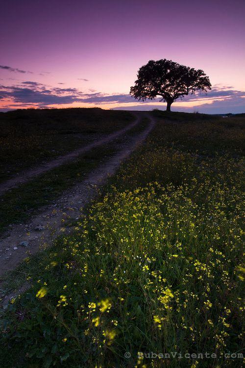 Single tree by the path. Estrela, Portugal