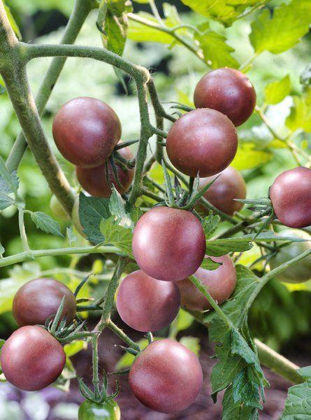 Do grandma's gardening tips still work today?: Fruit Gardens, Bare Roots, Grandma Gardens,  Rose Hip,  Rosehip, Super Gardens, Gardens Mi Summer, Gardens Center Nurseries, Gardens Bliss