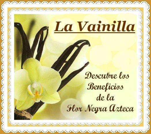 Monica Aries: La Vainilla y sus Beneficios