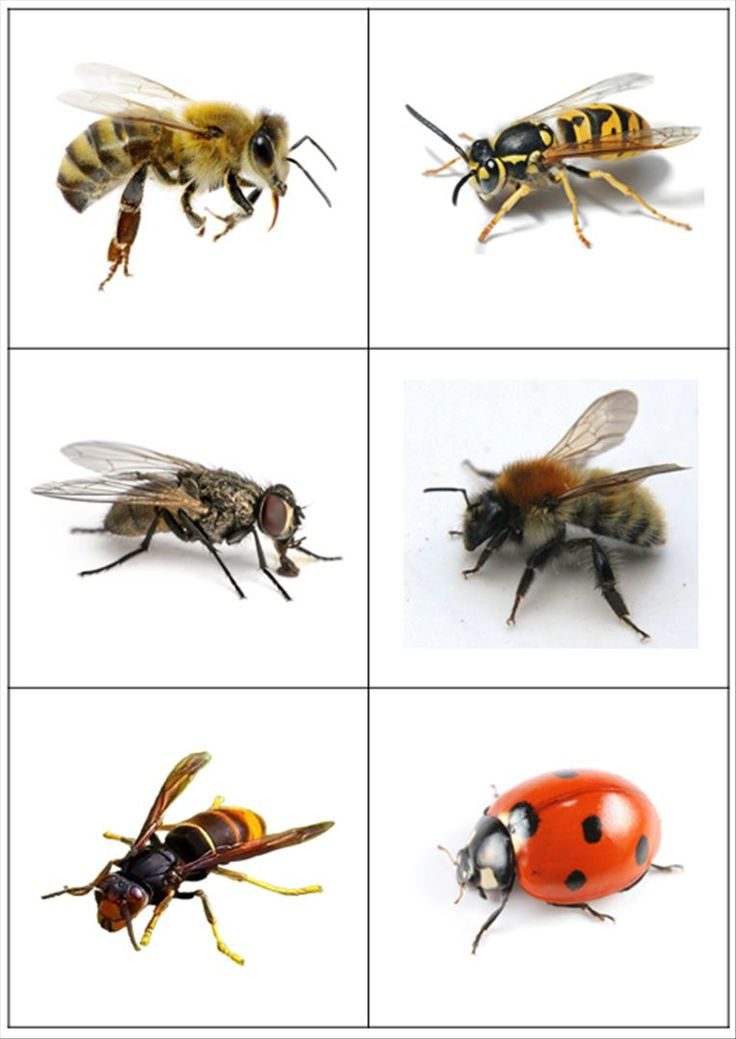 Images classifiées - insectes et petites bêtes