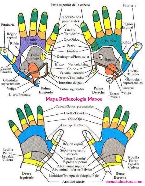 Mapa grafico  Reflexologia de Manos.