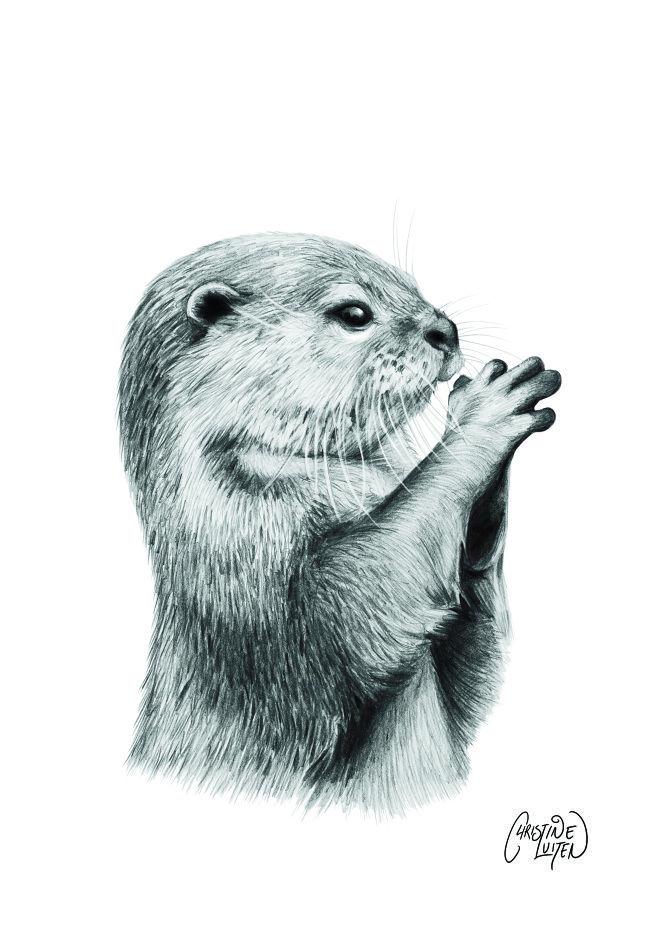 otter best photos - Поиск в Google