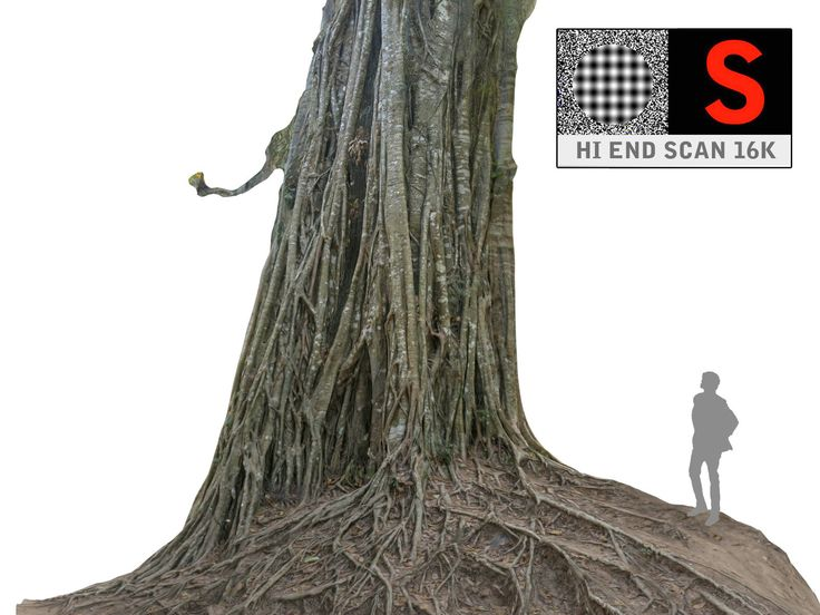 3d jungle tree 16k model