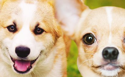 ft-cutest-dog-breeds